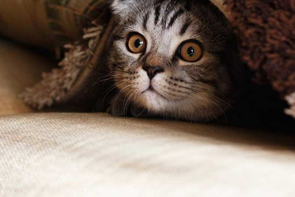 Don't be a fraidy cat (like this kitten!) stop worrying and start writing within the next hour with these handy tips!