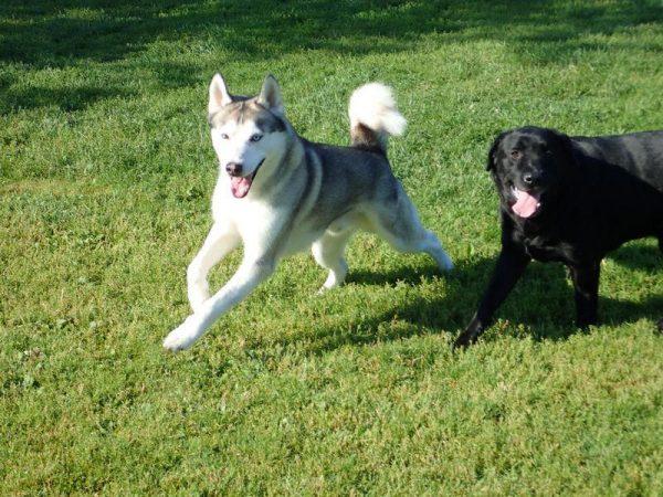 Alexa's dogs