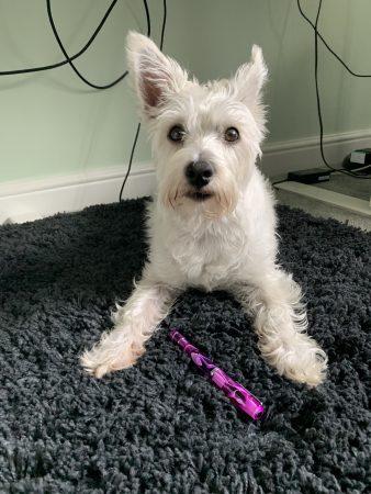 Millie modelling the Narwhal pen